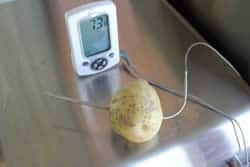 Probe through Potato